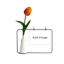 郁金香玻璃花瓶卡片装饰