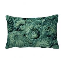 鹦鹉螺菊石化石照片标本 抱枕靠枕腰枕沙发靠垫双面含芯礼物