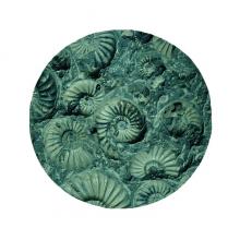 鹦鹉螺菊石化石照片标本 圆形地垫防滑地毯卧室宠物法兰绒垫60/50cm礼物