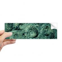鹦鹉螺菊石化石照片标本 矩形保险杠贴纸笔记本窗户车身贴